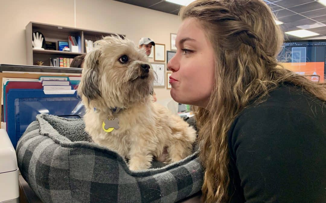 Our team member spotlight: Amanda and her dog Percy.